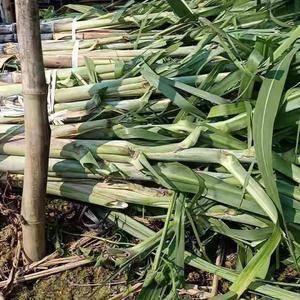 专业代理甘蔗,一条龙服务。本产地交通便利,种植甘蔗历史久...