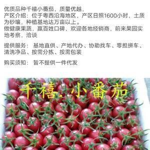 【千禧圣女果】广东茂名原产地代收,3万亩种植规模,提供场...