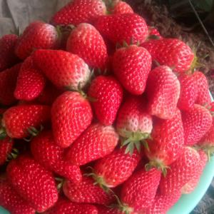 甜宝草莓,色泽鲜亮,口感香甜,便宜了