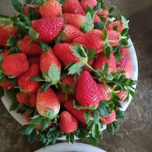 优质甜宝草莓,专业代收,大批量出货,1556256702...