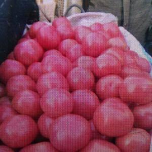 天然无公害西红柿   暖棚果子    弧三以上  5-7...