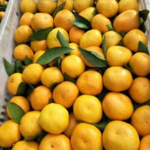武当蜜橘。清甜可口。大量货。代办、托运、打腊、装车、包装...