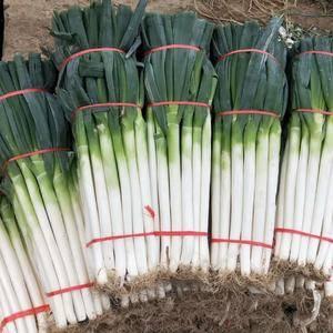 山东省费县大量供应铁杆大葱,毛葱净葱加工厂。