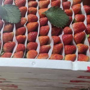 历城区唐王草莓基地,优质应季草莓。