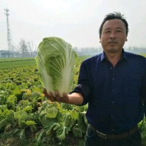 白菜0.4左右一斤,5000斤起批