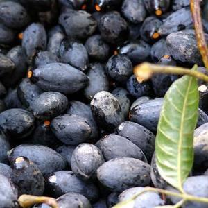 各种橄榄。黄橄榄。甜橄榄。黑橄榄价格优惠 需要联系186...
