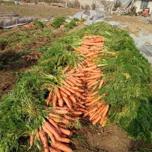 有大量的胡萝卜13905490487