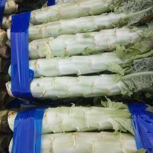 我处有万余亩大棚蔬菜基地,旭淳合作社代办西瓜,辣椒,莴苣...