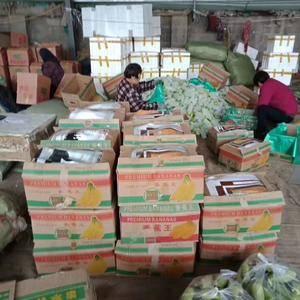 暖棚绿皮西葫芦,大量上市,瓜条直又亮,半斤以上,电话13...