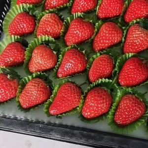 丹东久久红颜草莓现摘现发1384159保证新鲜1923