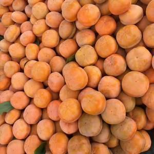 磨盘柿子大量现货价格优惠整箱包装需要的联系没有任何中间商