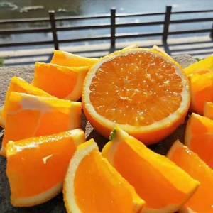 甜橙  伦晚  秭归脐橙,纽荷尔  中华红血橙大量上市,...