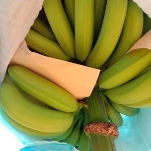 本人从事代办云南香蕉6年 有需要加微信:w201545...