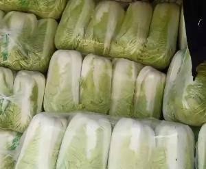 山东肥城北京三号白菜大量供应