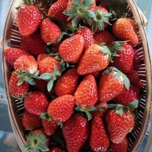 有机红颜奶油草莓,全国十大好吃草莓,品质保证,欢迎实地考...