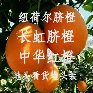秭归脐橙 纽荷尔 长虹 圆红 中华红 红心橙 碰柑 芦柑...