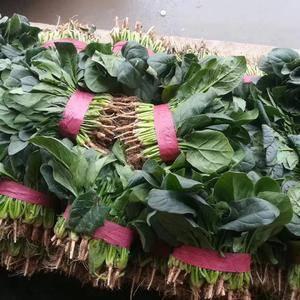 河北邯郸永年南大堡联邦蔬菜市场,需要联系我1518881...