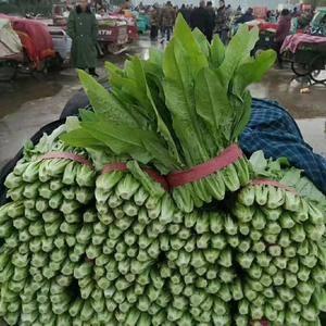 精品油麦菜,大量上市,河北邯郸联邦蔬菜市场,各种蔬菜都有...
