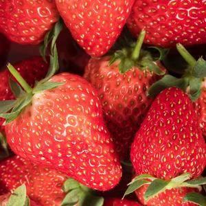 红颜草莓绿色无公害。
