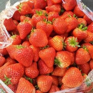 草莓甜宝草莓
