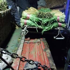 河北抚宁代收韭菜需要的打电话13930368956