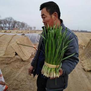 汉中冬韭  根紫 叶厚  需要的老板联系  量大