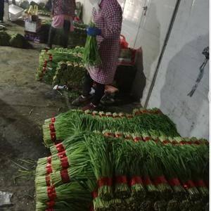 布庄村韭菜基地位于河南武陟县城西南2公里,交通便利,是受...