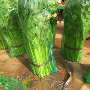 河北邯郸大量上市各种蔬菜需要联系我15188817759...