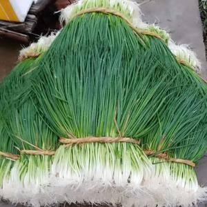 武汉新洲大棚小葱,大面积种植,新鲜,味美,有老板看上吗,...