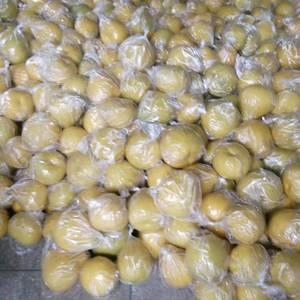 大量供应兴坪沙田柚,个头均匀水份足,果型靓,颜色好,欢迎...