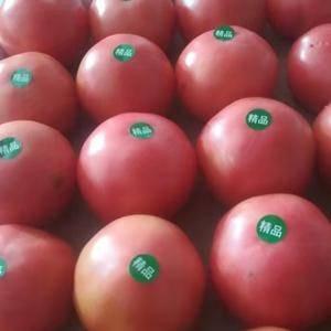 内蒙古赤峰市宁城县大城子西红柿大量上市了。欢迎全国各地新...