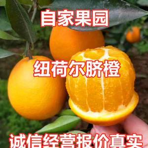 秭归脐橙口感脆甜入口化渣树上鲜果看园订货!量大优惠153...