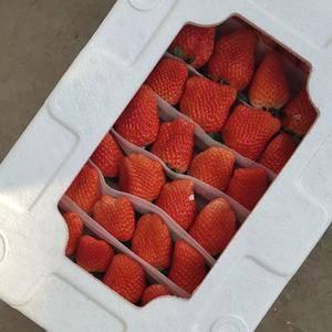本地草莓面积大,品质好!保证质量!诚信合作双蠃!