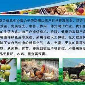 北京553红薯/种薯/红薯种