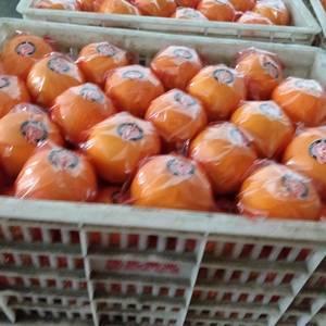 胡柚果实美观,呈梨形,圆球形或扁球形,色泽金黄。单果重3...
