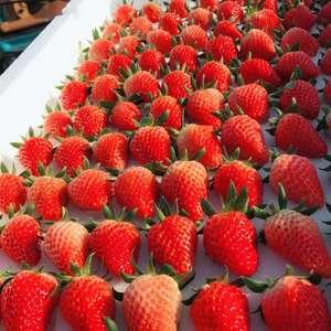 山东省青岛平度市草莓代办代收 电/微:155886979...