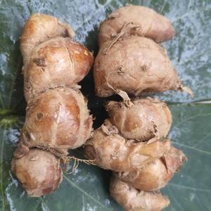 广东湛江沙姜种植户,沙姜种植基地