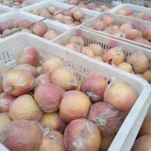 大量供应红富士苹果!苹果口感脆甜、色泽鲜艳、果型端正等,...