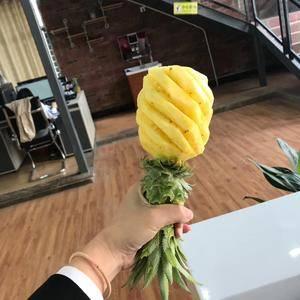 广东湛江徐闻菠萝,大量上市,欢迎各界朋友过来采购