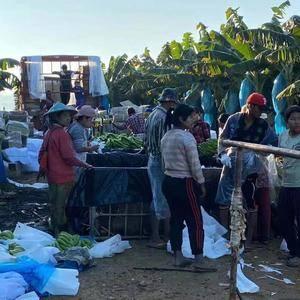 自家种植,缅甸香蕉,中上品