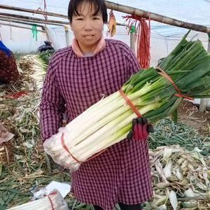 山东费县薛庄镇城阳村七天里,大葱加工厂找玫瑰,电话135896709...
