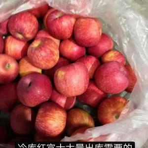 山东苹果13176070878大量出库,各种规格都有,货...
