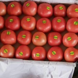 我地区专产西红柿,质量好,价格低,欢迎前来采购
