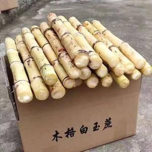 供应广西贵港木格特产白玉蔗种苗,有需要电话联系17520...