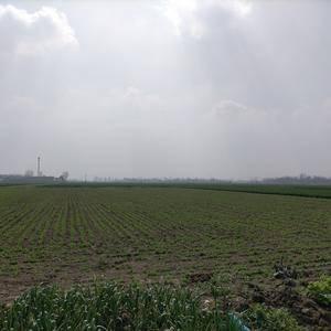 河南南阳两百亩豌豆角还有两个月大量上市,有需要的可以提前...