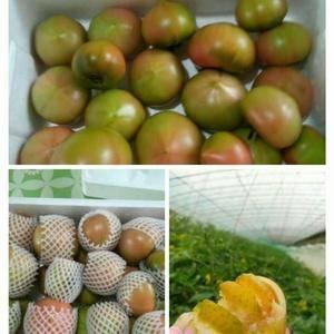 水果西红柿,酸甜可口,口感极佳。无农药残留,农家肥。可以...