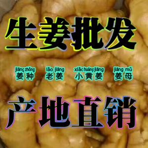 山东优质生姜产地直销【13954971461】 常年供应...