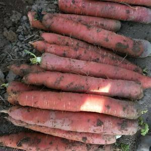 冷库红萝卜大量供应,货源充足质量保证,每袋60斤左右,需...