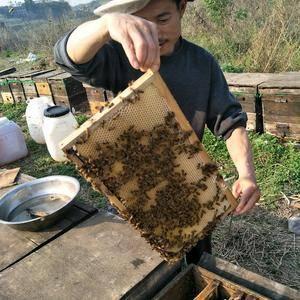 自家土蜂蜜,批发零售,量大从优,美丽热线,1814258...
