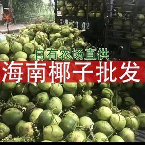 海南海口正宗新鲜椰子场地现摘价格优惠,欢迎咨询13632...